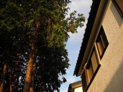 隣接する木との距離